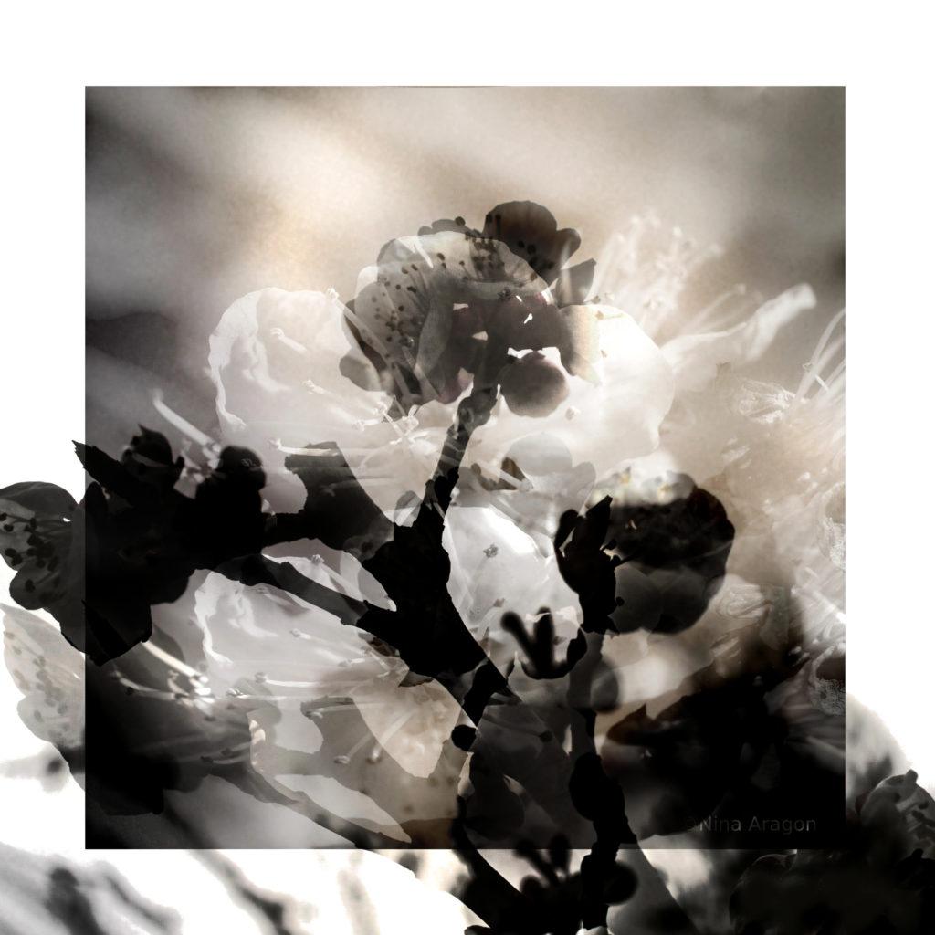 Nina Aragon Photos Art Contemporain