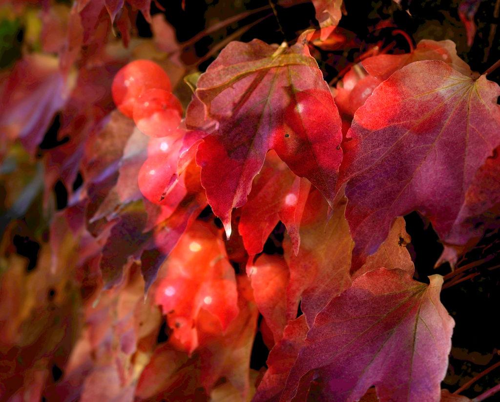 Nina Aragon Créatrice d'image Photo d'Art